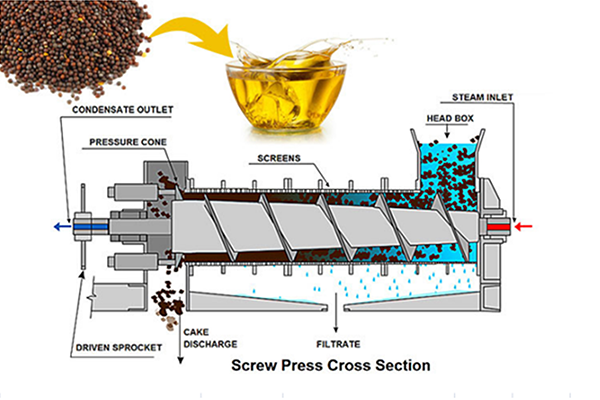 screw structure of oil pressing machine
